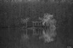 Ile mystérieuse (mars-chri) Tags: ile étangs lacs saule arbre lumière reflet noiretblanc mystère eau forêt bresse
