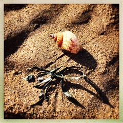 Seashell & seaweed shadows on the sand (Julie (thanks for 8 million views)) Tags: 100xthe2019edition 100x2019 image40100 hipstamaticapp squareformat iphonese duncannonbeach mollusc shell whelk sand seaweed seashore beach shore fauna hss snailsaturday ireland irish wexford nature texture