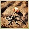 Seashell & seaweed shadows on the sand (JulieK (thanks for 8 million views)) Tags: 100xthe2019edition 100x2019 image40100 hipstamaticapp squareformat iphonese duncannonbeach mollusc shell whelk sand seaweed seashore beach shore fauna hss snailsaturday ireland irish wexford nature texture