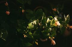 (maryam_mzadeh) Tags: light نور canonae1 film fuji