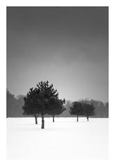 As winter fades (bprice0715) Tags: canon canoneos5dmarkiii canon5dmarkiii landscape landscapephotography nature naturephotography blackandwhite bw blackwhite monochrome mono moody trees snow snowylandscape fineart highcontrast