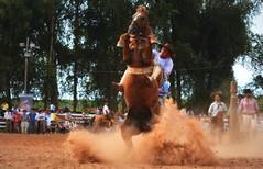 Surt e Passarinho da Coronilha (Eduardo Amorim) Tags: gaúcho gaúchos gaucho gauchos cavalos caballos horses chevaux cavalli pferde caballo horse cheval cavallo pferd pampa campanha fronteira quaraí riograndedosul brésil brasil sudamérica südamerika suramérica américadosul southamerica amériquedusud americameridionale américadelsur americadelsud cavalo 馬 حصان 马 лошадь ঘোড়া 말 סוס ม้า häst hest hevonen άλογο brazil eduardoamorim gineteada jineteada
