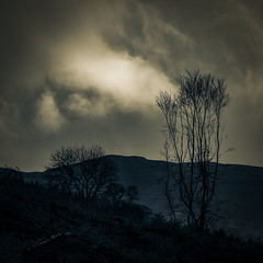 Winter; Clinging On (prajpix) Tags: silhouette shadows trees woods woodland forest hills mountains sky clouds rain invernesshire highlands scotland crossprocessing photoshop mono blue atmospheric cold wet