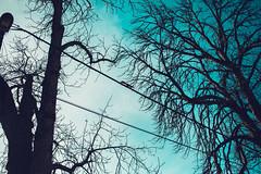 KRIS7941 (Chris.Heart) Tags: erdő buda budapest túra természet forest nature hiking