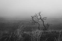 Foggy Three (North Hill Photo) Tags: wildlife wanderlust wild wide wood fog forest photography photo pancake 24mm trees travel cartago canon costarica composition canonxsi contrast beautiful bracketing bw