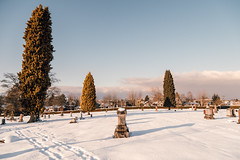 Vancouver-Winter-Walks-15 (_futurelandscapes_) Tags: vancouver winter snow cold february mountainview cemetery trees arboretum sunset evening graves sunny blue white vintage