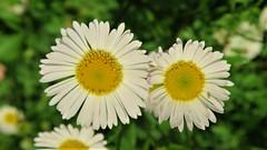 Chiribita (eitb.eus) Tags: eitbcom 30487 g1 tiemponaturaleza tiempon2019 flora bizkaia portugalete juantxuaberasturi