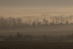 Matin brumeux - misty morning (gopillentes) Tags: arbres aube brume champs silhouettes trees dawn matin morning mist fields landscape nature paysage france pastel