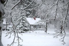 house in the forest (Rambynas) Tags: lithuania lietuva forest rambynoregioninisparkas house winter snow