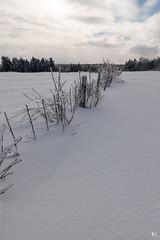 ''L'ère de glace!'' (pascaleforest) Tags: paysage landsacape passion nikon nature glace ice cloture light lumière sky ciel winter hiver white blanc