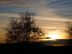 Westblick (Meine Sicht auf diese Welt...) Tags: leica 1260 lumix panasonic g9 bäume scherenschnitt blick westblick winter landschaft landscap himmel blau kondensstreifen fluglinien eichsfeld heiligenstadt horizont