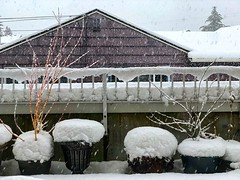 I barely got to appreciate the extra inch of snow from last night (round 3) when the next snowstorm hit this afternoon! #seattlesnowpocalypse2019 #snowinseattle #snow #itssnowing #itssnowingagain #snowinginseattle #seattlesnowpocalypse (tiina2eyes) Tags: i barely got appreciate extra inch snow from last night round 3 when next snowstorm hit this afternoon seattlesnowpocalypse2019 snowinseattle itssnowing itssnowingagain snowinginseattle seattlesnowpocalypse ifttt instagram