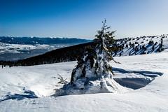 0145_DSC_2583 (marcellszmandray) Tags: kirándulás tél lucskaifátra szlovákia hó fátra