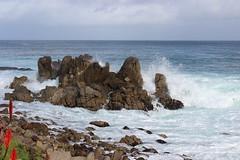 IMG_9794 (mudsharkalex) Tags: california pacificgrove pacificgroveca