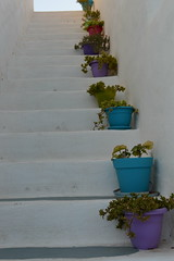 plants stairs (unciclamino) Tags: