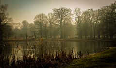 Hazy light (jmiller35) Tags: reflection sunshine canon park england mist forest trees water lake pond haze