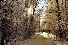 In the winter park1 (prokhorov.victor) Tags: зима парк лес природа пейзаж деревья снег солнце