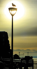 BRYAN_20181204_IMG_1315 (stephenbryan825) Tags: albertdock liverpool merseyside rivermersey royalalbertdock animals backlighting backlit birds dramaticlight lamp lamppost seagulls silhouette sky