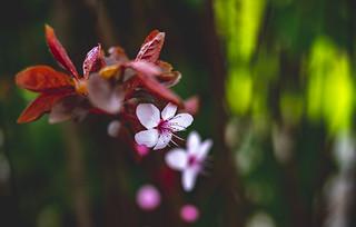Tree flowers ..🌸