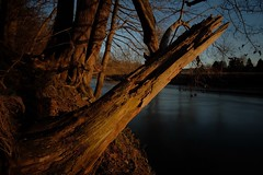 The last hurrah. Broken tree long time after the storm in sunset light. (johmako) Tags: tree sunset river samyang 12mm tripod nd filter 1000 fujifilm xm1 out camera