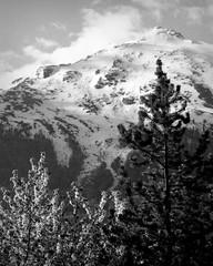The background (p2-r2) Tags: nikon f3 f3hp france blackandwhite film agfa apx 100 new emulsion aussois mountains snow trees nikkor105mmf25ai