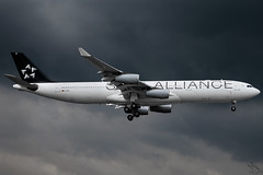 Lufthansa - Airbus A340-313 / D-AIGP @ Manila (Miguel Cenon) Tags: lufthansa lha340 lha343 lufthansaa340 lufthansaa343 daigp staralliance rpll airplanespotting airplane apegroup appgroup airport aircraft aviation airbusa340 airbusa343 a340 a343 queenoftheskies wings widebody widebodyjet wing wheel wide winglet manila nikon naia d3300 planespotting ppsg philippines plane