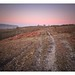 **Bridleway sunset, New Forest, UK**