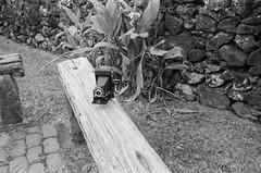 Pre war Zeiss Nettar.  Taken on a Contax T. Kodak 3200 T amx at 800 iso (adamnsinger) Tags: contax t zeiss nettar pre war film kodax max 800 iso