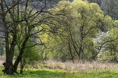 Frühlingswald (3) (Pippilotta aus dem Tal) Tags: sel90m28g
