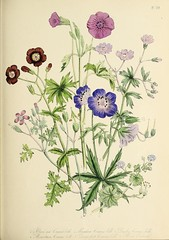 n154_w1150 (BioDivLibrary) Tags: classification greatbritain identification identificationguides plants wildflowers smithsonianlibraries bhl:page=55514893 dc:identifier=httpsbiodiversitylibraryorgpage55514893 artist:name=jane webb loudon artist:name=janewebbloudon hernaturalhistory janewebbloudon janewellswebb janewellsloudon janewellswebbloudon janewloudon q514667 illustrator:wikidata=q514667 womeninscience artist:name=janewellswebb artist:name=janewellsloudon artist:name=janewellswebbloudon artist:name=janewloudon author:name=janewebbloudon author:name=janewellswebb author:name=janewellsloudon author:name=janewellswebbloudon author:name=janewloudon
