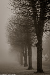 DSC_3439: Fade to Grey (Colin McIntosh) Tags: fog winter nikon d610 105mm f25 pc manual focus