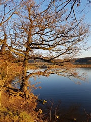 Peace and Serenity (daviddaniels989) Tags: clumber park tree water calm peace serenity sunshine afternoon winter