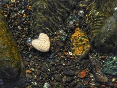 a floating wet heart. (panoskaralis) Tags: heart stone wet water sea rocky rockybeach lesvosisland lesvos mytilene greece greek hellas hellenic outdoor macro aegean aegeansea nikoncoolpixb700 nikon nikonb700 floating