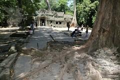 Angkor_Ta Prohm_2014_10