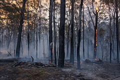 nowa-nowa-3603-ps-w (pw-pix) Tags: fire bushfire burning flames embers trees logs ash sticks dirt black grey orange yellow green controlledburn fuelreductionburn turnedintoabushfire smoke smokey haze hazy afternoon lateafternoon nearbruthennowanowaroad nearbruthenbuchanroad kennyroad prettysally nowanowa eastgippsland gippsland easternvictoria victoria australia peterwilliams pwpix wwwpwpixstudio pwpixstudio