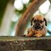 OSHA - Alliance Animal Health