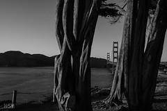 GG Bridge and Marin Headlands from Coastal Trail 2 (skot917) Tags: 2018 afs1635mmf4 coastaltrail d810 goldengatebridge marinheadlands nikon sanfrancisco sunset