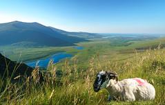 Irland, Dingle Peninsula, Connor Pass (FV1405) Tags: 2018 dinglepeninsula irland tier