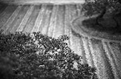 February 19, 2019_kyoto_7 (Satoshi Kondo) Tags: bw bnw blackandwhite blackandwhitephotography blackandwhitephoto bnwphoto bwphoto bnwphotography bwphotography blackandwhitepoto blackandwhitepotography monochrome filmphotography filmcamera filmphoto film filmpoto leica leicaphoto leicaworld leicam3 street streetphoto streetsnap streetphotography summicron summicron50mm kyoto japan 京都 白黒 フィルム フィルム写真 フィルムカメラ ライカ ライカm3 ズミクロン kodak