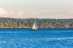 This is Your Paradise (Thomas Hawk) Tags: america seattle usa unitedstates unitedstatesofamerica washington washingtonstate boat fav10