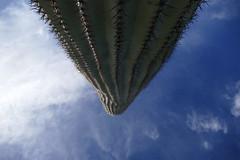 Huge (ivlys) Tags: usa arizona tucson sonoradesert sonorawüste saguaronationalparkeast kaktus cactus landschaft landscape himmel sky blau blue wolken clouds natur nature ivlys