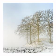 ❤Happy Holidays❤ (magnus.joensson) Tags: sweden swedish skåne winter march 6x6 rolleiflex carl zeiss tessar 75mm kodak porta 400 c41 fog snow sunrise medium format söderslätt