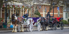 Niagara on The Lake Ontario 2018 (John Hoadley) Tags: horse carriages princeofwaleshotel niagaraonthelake ontario 2018 december canon 7dmarkii 100400ii f5 iso320