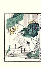 Sacred lotus, knotweed and little egret (Japanese Flower and Bird Art) Tags: flower sacred lotus nelumbo nucifera nelumbonaceae knotweed polygonum polygonaceae bird little egret egretta garzetta ardeidae ginko adachi nihonga woodblock picture book japan japanese art readercollection