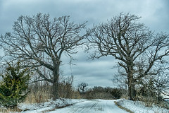The Archway (gabi-h) Tags: archway trees snow road princeedwardpoint gabih wildlifearea white blue sky clouds nature branchesagainstthesky stark archwayoftrees