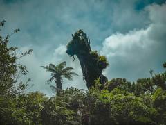 Horse-Like Tree (Shzee Photography) Tags: tree horse nz newzealand nature trees plants green blue bush hd forest scenery clouds taranaki pukeiti
