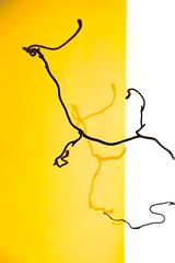 Corkscrew twigs (judy dean) Tags: 365the2019edition 3652019 day15365 15jan19judydean 2019 hazel contort corkscrew twigs shadows wall yellow