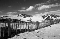 Formby (Manuel Goncalves) Tags: formby 35mmfilm blackandwhite nikonn90s kentmere400 epsonv500scanner beach dune sea woods merseyside sefton