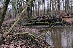 Bekendellle Winterswijk. Ook in de winter de moeite waard. 👈 (d50harry123) Tags: landscape landschap bekendellle