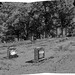 Cemetery panorama, tone alteration. Southern New Hampshire, July 2018